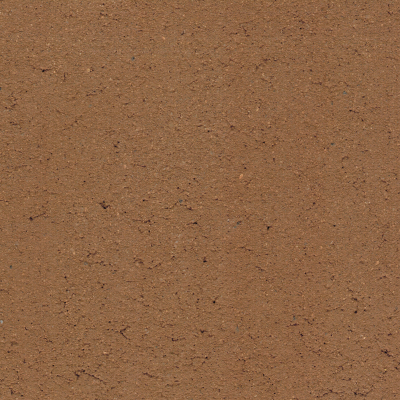 6_Cacao
